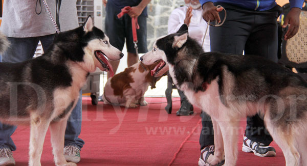 Ceylon Kennel Club Dog Show