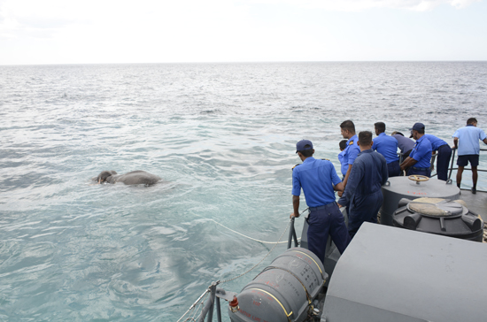 Sri Lankan navy rescues elephant... 14 km off the coast