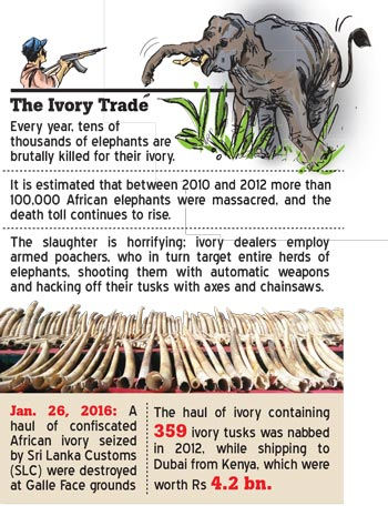 singapore illegal animal trafficking Curbing illegal wildlife trafficking  singapore south africa south  and the middle east has also become a major transit hub for illegal trade of animal parts.