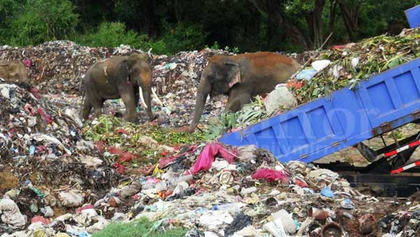 garbage menace reaches forest reserves daily mirror sri lanka